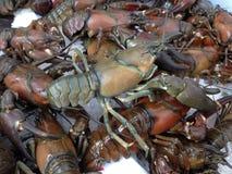 Pile of Crawfish or Crayfish Stock Image