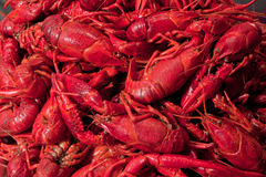 Pile of crawfish ready to eat. Close up of a crowdy bunch of red cooked crawfish Stock Image
