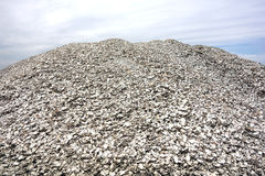 Pile of Crushed Oyster Shells and Clam Clamshells Royalty Free Stock Image