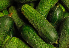 Pile of cucumber Royalty Free Stock Photo