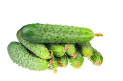 Pile of cucumber with dry flowe isolated over white Royalty Free Stock Images