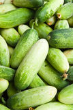 Pile of cucumber in fresh market Royalty Free Stock Images