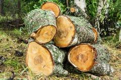 Pile of cut birch logs Stock Photo