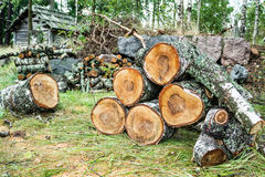 Pile of cut birch logs Stock Photography