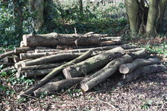 A pile of cut branches. On the ground in the woods Stock Image