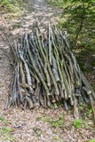 A pile of cut branches. On the ground in the woods in Roznow , Poland. Europe Royalty Free Stock Photography