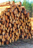 Pile of cut down trees Stock Image