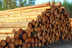 pile of cut down trees Stock Photo