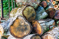 Pile of cut eucalyptus tree logs in a forest Royalty Free Stock Image