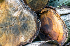 Pile of cut eucalyptus tree logs in a forest. Royalty Free Stock Images