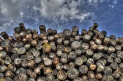 Pile of cut logs Stock Photography