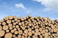 Pile of cut logs on blue sky background Royalty Free Stock Image