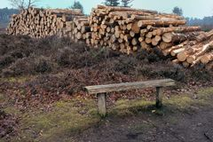 Pile of cut logs on heathland with bench in foreground.  Stock Images