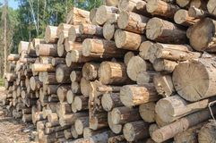 Pile of cut logs. Warehouse felled logs in the forest Royalty Free Stock Images