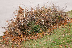 Pile of cut old dry tree branches with autumn fall leaves on them, waste garbage trash on ground. Background texture Royalty Free Stock Photo