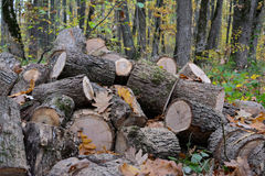 Pile of cut out firewood, close up Royalty Free Stock Photography