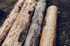 Pile of cut pine logs in the forest. On the ground Stock Photos