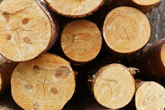 Pile of cut timber background Royalty Free Stock Photo
