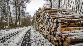 A pile of cut timber logs Stock Photos