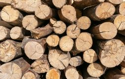 Pile of cut tree logs wood texture background. Tree trunks. Firewood stack for the background. stock image