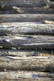 Pile of cut tree trunks Royalty Free Stock Images