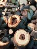 A pile of cut tree trunks. Background Royalty Free Stock Photography