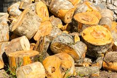 Pile of cut tree trunks Royalty Free Stock Photo