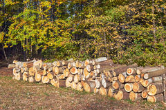 A pile of cut tree trunks in a forest Royalty Free Stock Images