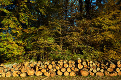 A pile of cut tree trunks in a forest Royalty Free Stock Photography