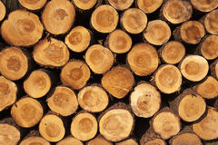 A pile of cut tree trunks. Giving a nice view of the concentric year rings Stock Photography