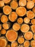 Pile of cut treetrunks Stock Photos
