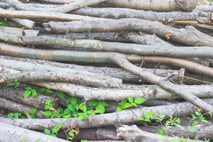 Pile of cut twigs background Royalty Free Stock Images