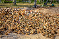 Pile of cut and whole coconuts Royalty Free Stock Photo