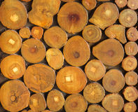 A pile of cut wood stump log Royalty Free Stock Image