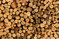 A pile of cut wood stump log texture Royalty Free Stock Photography