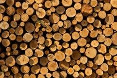A pile of cut wood stump log texture Stock Photography
