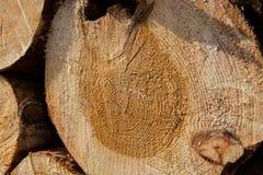 A pile of cut wood stump log texture Stock Photo