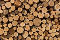 A pile of cut wood stump log texture Royalty Free Stock Image
