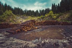 A pile of cut wooden logs in an industrial field stock images