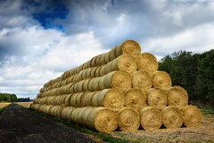 Pile of cylinder haystacks 3 Stock Photos