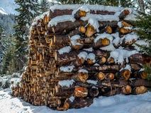 Pile d'arbres dans la forêt Photo stock