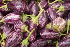 Pile d'aubergine pourpre - melongena de solanum photo stock