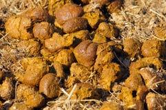 Pile d'engrais frais de cheval Photographie stock