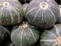Pile of dark green tropical pumpkins Stock Image