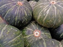 Pile of dark green tropical pumpkins for background. Or banner Royalty Free Stock Photo