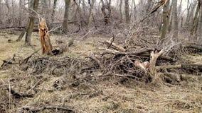 Pile de barre oblique de forêt des branches, des brindilles et des rondins banque de vidéos