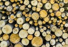 Pile de bois de charpente de bois de construction de Forest Wood Logs image stock