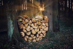 Pile de bois de chauffage dans la forêt, dans la forme d'un coeur, le beau soleil Photos stock