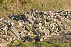 Pile de bois de chauffage de saule photographie stock