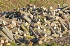 Pile de bois de chauffage de saule photo stock
